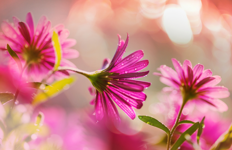 flower-P7TG7UC.jpg